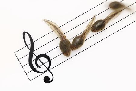 tadpole: Tadpole of staff notation on