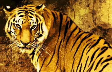 tora: Tiger-like drawing distant view
