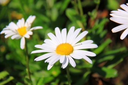 plurality: Flower
