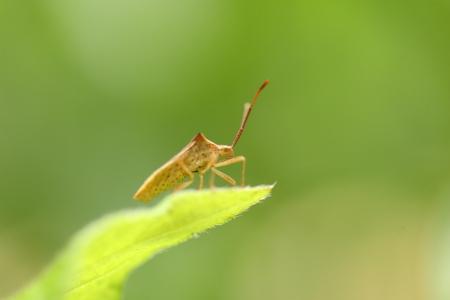 imago: Hari bug Stock Photo