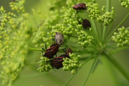 imago: Shield Bug Stock Photo