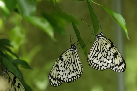 imago: Two dogs butterfly to stay hanging on