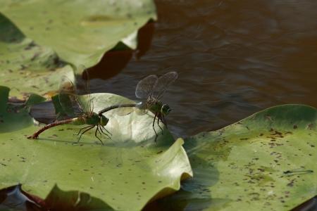 spawning: Consolidado desove Gin'yanma