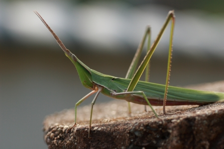 ordinance: Ordinance of the Ministry of grasshopper green type