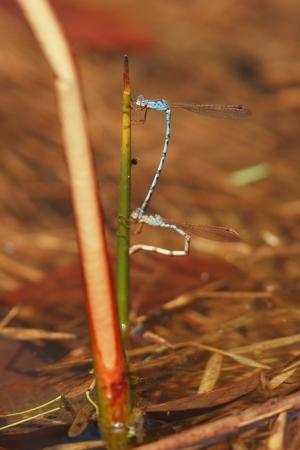 imago: Spawning of Hosomiotsunentonbo Stock Photo