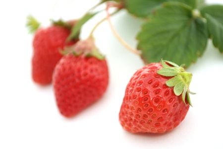 ripeness: The strawberry Stock Photo