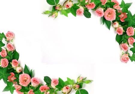 Frame of roses Stock Photo