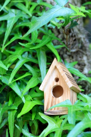 outdoor pursuit: Ivy and birdhouse