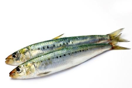 plurality: Sardine