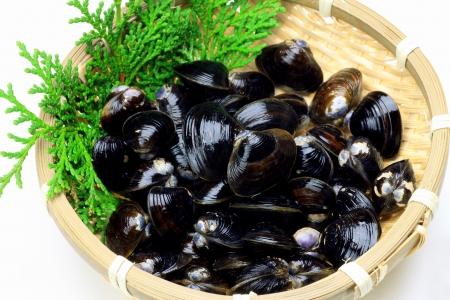 plurality: Freshwater clam