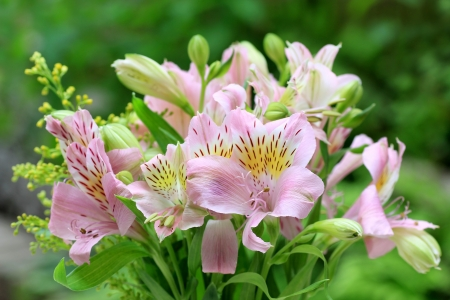 alstroemeria: Alstroemeria Stock Photo