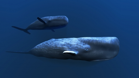 subsea: Whale Stock Photo