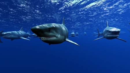 subsea: Shark Stock Photo