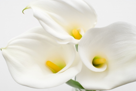Flower of white color photo