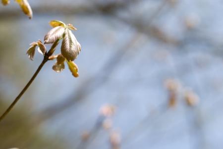 fagaceae: Sprout tree Quercus