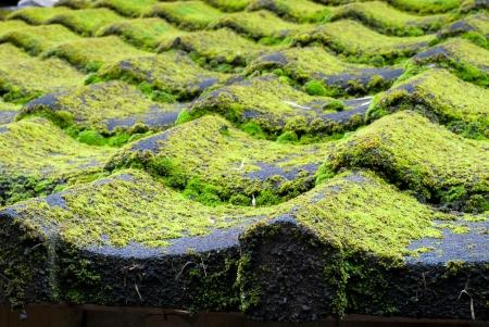 rooftile: Il shi ta radice Tile pelliccia