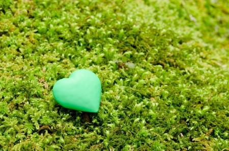knack: Moss on Full Green in Full hand  Suites Stock Photo