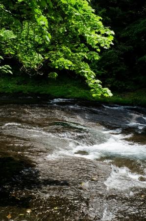 riverine: Acer mono fresh green valley and Kikuchi