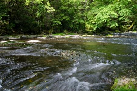 riverine: Clear stream of Kikuchi Valley