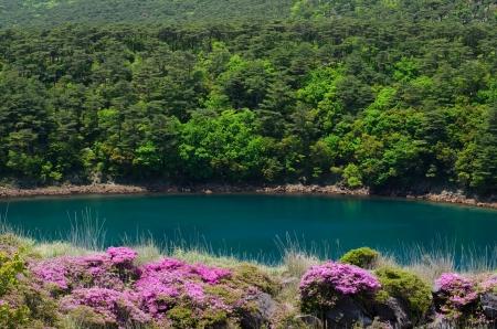 immobility: Flowers Miyama Kirishima and immobility pond of Kirishima