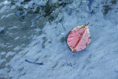 riverine: Leaves and colored leaves drifting in the river