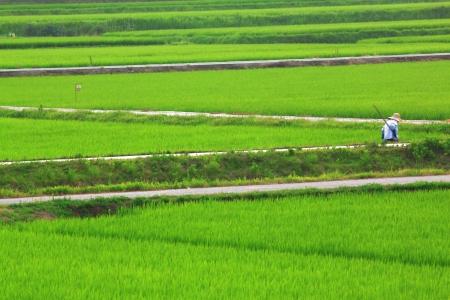 cutback: Rural landscape