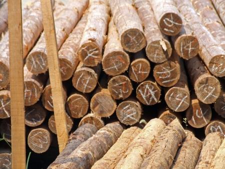 timberland: Timber