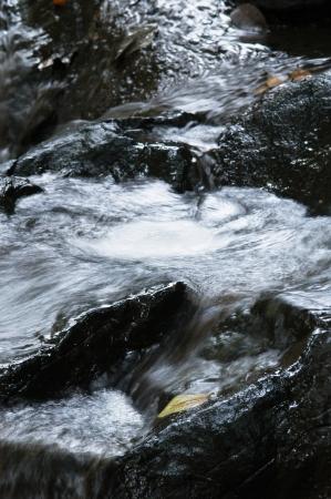 riverine: Flow of water