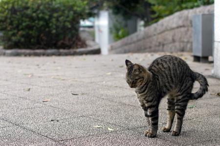 alargamiento: Gatito con el crecimiento