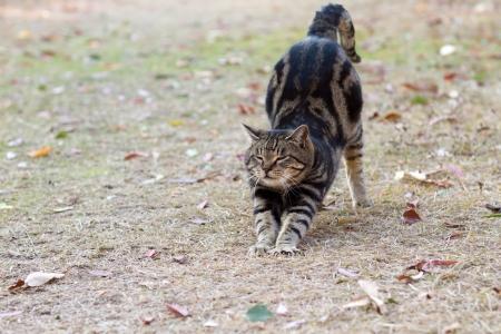 elongacion: Gato para el crecimiento