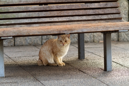 Cat under the bench photo