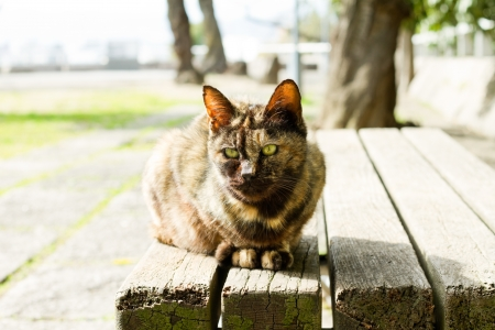 Cat on the bench photo