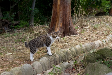'living organism': Stray cat