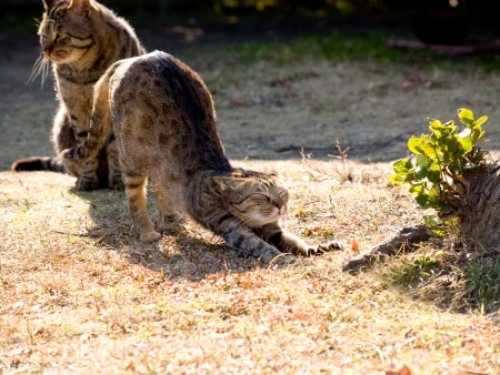alargamiento: Gato para el crecimiento