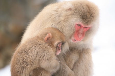 contemplated: Monkey