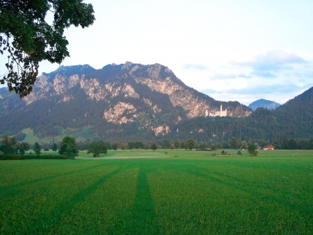 Grassland and Germany Neuschwanstein Castle photo