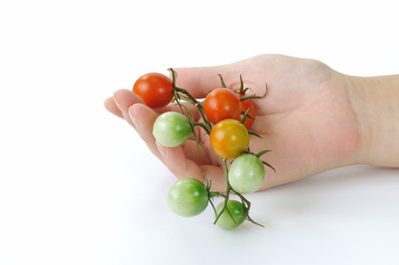 Harvest of cherry tomatoes photo