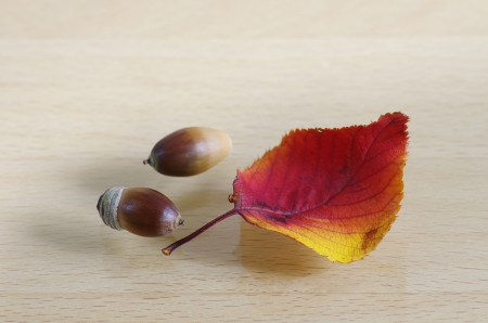 Acorn and (cherry) foliage photo