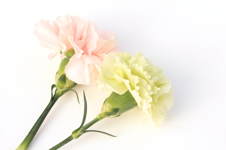 Carnation pink and green photo
