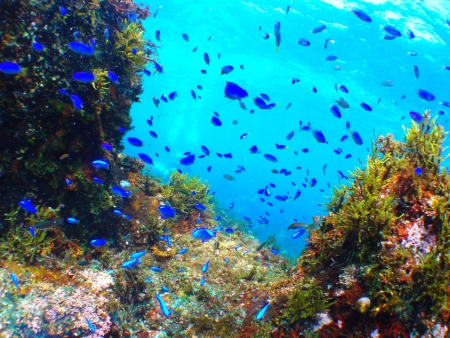 fishes in the water photo