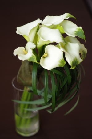 Calla lilies in a vase photo