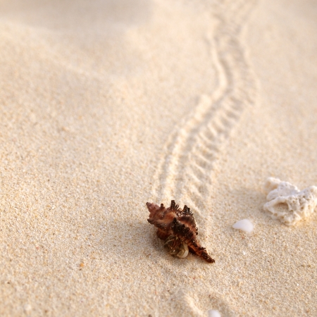 Path of a hermit crab photo