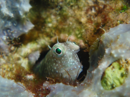 A small fish hiding in rock crevices photo