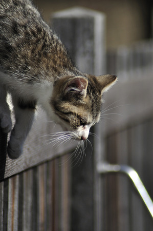 Kitten climbing over the wooden fence photo