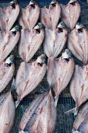 The vertical position horse mackerel photo