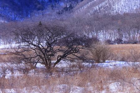 Winter at Oku-Nikko forest photo