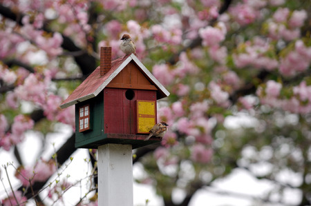 Sparrow birds on birdhouse  photo