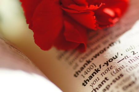 Red carnation flower on a dictionary photo