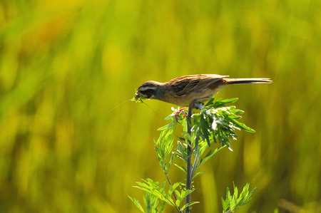 Bird perched on a plant photo