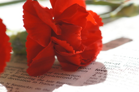 Red carnation on printed material photo